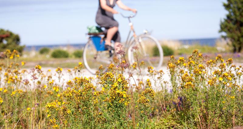 Cykelferie på Gotlandsleden