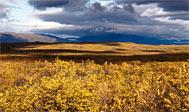 Vandring i Lapland: Abiskojaure - Abisko på Kungsleden
