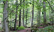 Bjurkärr Naturreservat