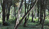 Eneskoven ved Anderstorp