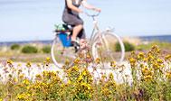 Gotlandsleden - cykelruten på Gotland