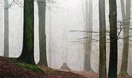 Hissö Naturreservat