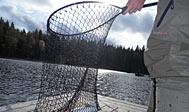 Lystfiskeri i Hammarsjön