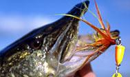 Lystfiskeri i Kävlingeån - Lödde å. Foto: skane.com © Jörgen Larsson