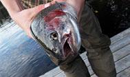 Lystfiskeri i Oppmannasjön. Foto: Fredrik Broman / Imagebank.sweden.se