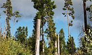 Nytebodaskogen