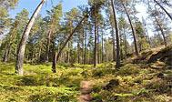 Vandring på Tjustleden i Småland