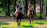 Rid på islandske heste i skoven i Småland