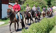 Ridning på islandske heste på Hallamölla Gård i Österlen, Sverige